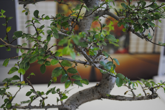 bonsai tree at work office decoration zen