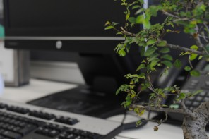 Add a Bonsai to your Office Interior Design
