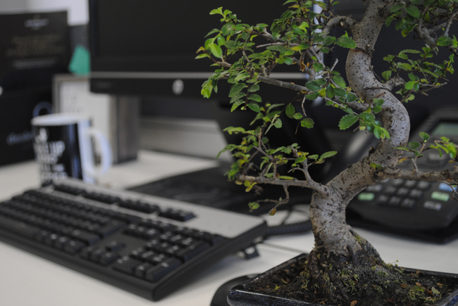 bonsai zen atmosphere computer desk keyboard mouse