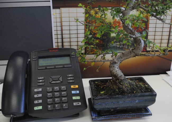 peace by the phone bonsai tree