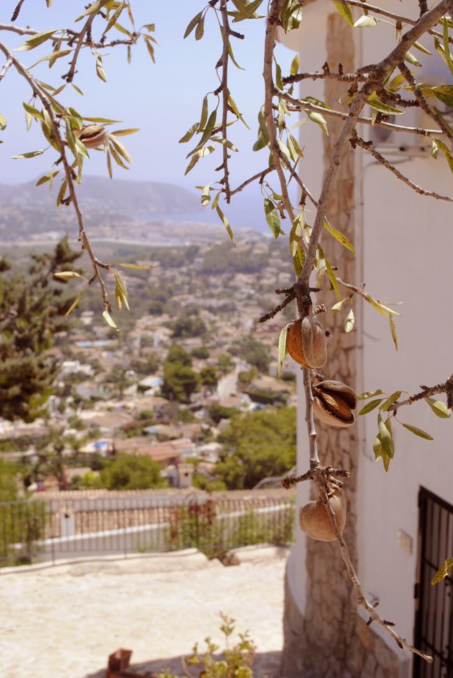 almond tree spanish villa home design