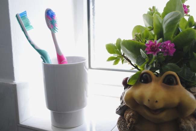 bright bathroom accessories and plan tortoise pot