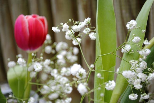 tulip flower arrangement in garden home