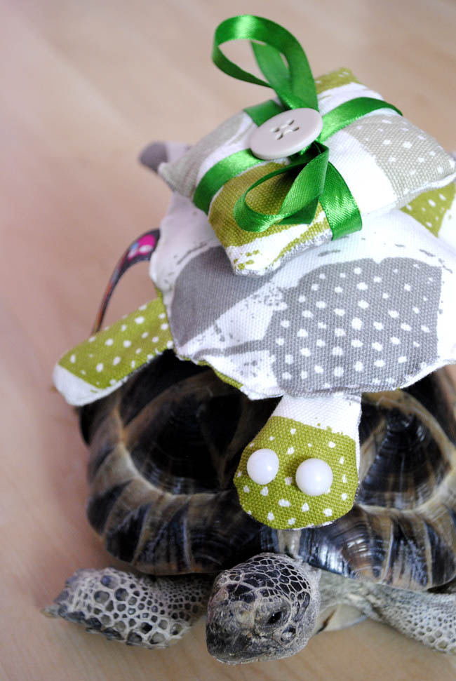 Kit the tortoise #lifeoftortoise ring bearer at wedding crafts