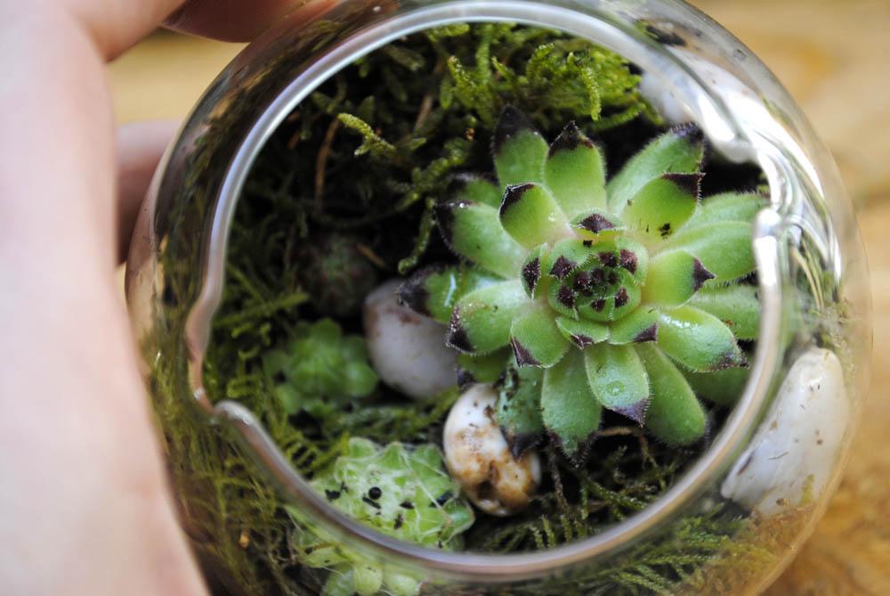 DIY mini terrarium planter