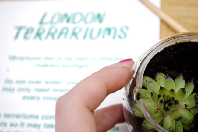 london terrarium workshop london plant