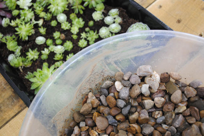 stones and plants at terrarium diy upstyling workshop lifestyle blog