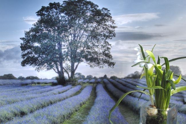 posterlounge farm lavendar country poster photo ideas