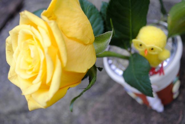 yellow rose in a diy plant pot crafts blog uk