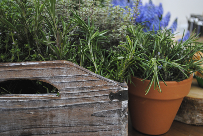 botanical plants fresh rustic home accessories
