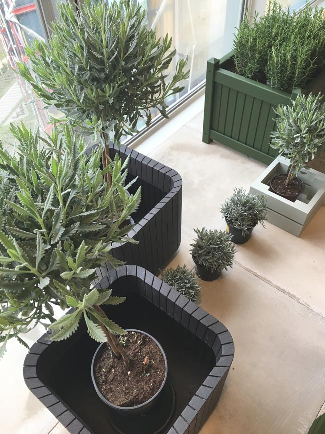green plants and shrubbery in black plant pots