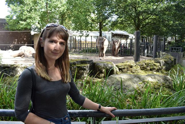 elephants-in-amsterdam-city-zoo