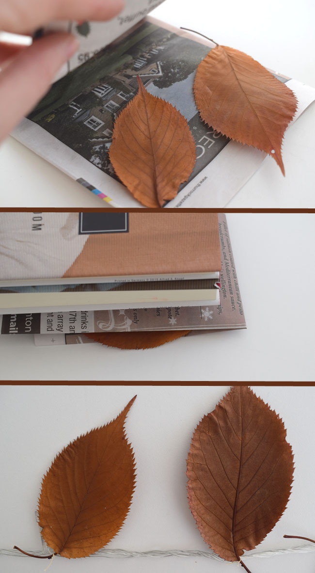step-by-step-guide-for-fairy-lights-decorating-autumn-season
