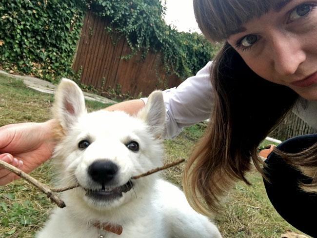 white-german-shepherd-smiling-with-stick
