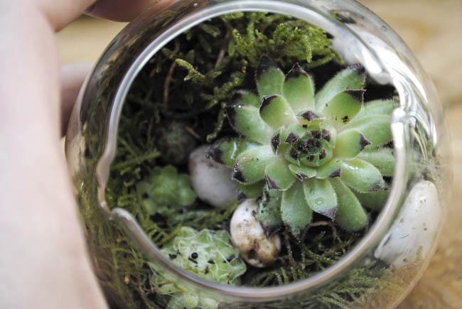 handmade-terrarium-diy