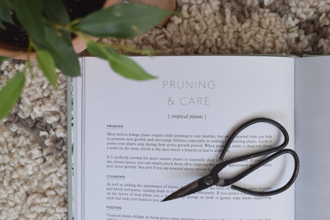 pruning-and-care-plants-tropical-botanicals
