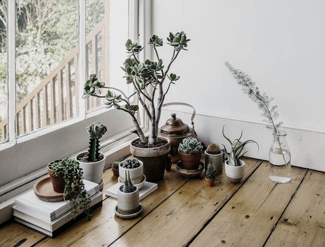 vacant-corner-house-of-plants-book